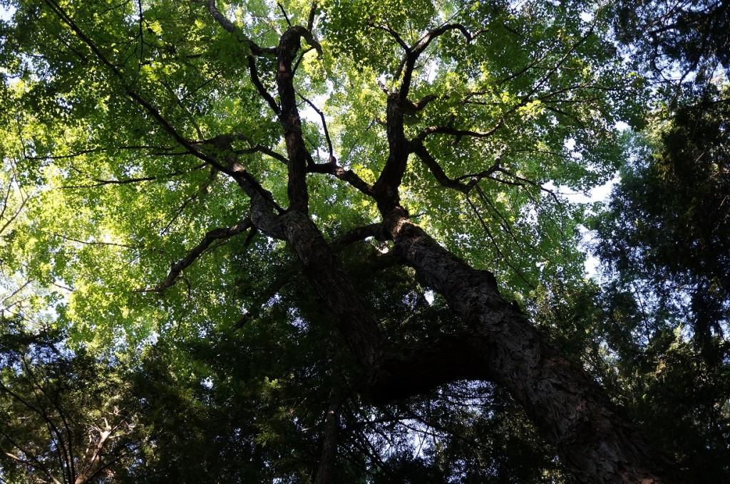 ttrees